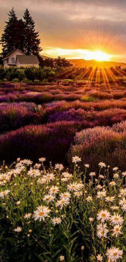 خورشید هر روز صبح ، بخاطرِ زنده بودنِ ما طلوع مےڪند  سهمت را از زندگے همین امروز بگیر...   #صبحتون_بخیر