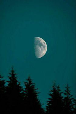 به آسمان زل زده بود و سیگارش را دود می کرد  گفتم : دنبال کدوم ستاره ای ؟  گفت : انگار چشمم ضعیف شده ! قبلا همین جا بود ... این جا ،همین بالای سرم ...  کامشرا عمیق تر گرفت ، ماه ها بود ستاره در آسمانش نبود ! به رویش نیاوردم آسمان بی ستاره را ... خودش هم میدانست عیب از چشمانش نیست ... دلش را جا گذاشته بود !!!   #شاهین_شیخ_الاسلامی