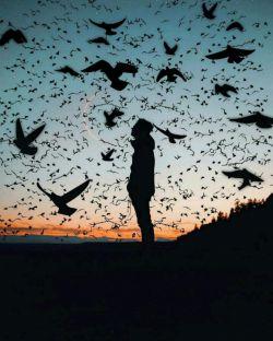 بال در بال پرواز