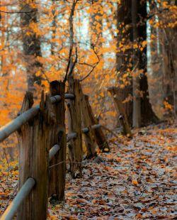 درخت ها قرار است نشانمان بدهند که چقدر رها کردن وابستگی ها میتواند زیبا و دوست داشتنی باشد...پاییز مبارک