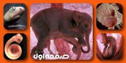 تصاویر زیبایی از حیوانات  مختلف (کوسه، مار، فیل، سگ و دلفین) در رحم مادر چند هفته پیش از تولد
