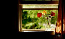 برای هر کس پنجرهای لازم است که پشتِ آن بنشیند و بتواند همه چیز را فراموش کند... #ذِکایی_اوزگور