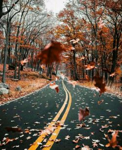 و پاییز... این زیبای دوست داشتنی با کوله باری از خاطرات چمدانی پر از بغض و دلتنگی و دستانی مملو از احساسِ بارانی آرام و سر به زیر از راه رسید.... #مهسا_سجاد
