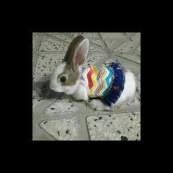 یه خرگوش داشتم همین شکل کوچولو بودو تقریبا دوماهه  چشماش یی قهوه ای بود اون یکی ابی خاکستری نه شبیه مادرش نبودنه باباش اینم قضیه ژنتیکه  اخرش رفتن فروختنش