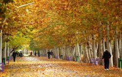 دوباره پاییز  اما نه ((فصل خزان)) زرد!  دوباره پاییز  اما نه فصل اندوه و درد!  دوباره پاییز  فصل زیبای سادگی