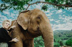 در این مکان گردشگران داوطلب تور چیانگ مای به گروههایی تقسیم میشوند تا از همه سایبانهایی که شبها فیلها در آن زندگی میکنند، دیدن کنند. در این پارک خبری از وسواسی بدون نیست و وقتی کار داوطلبانه در این مکان را انجام میدهید باید خودتان را آماده نمایید و از غذا دادن به فیلها تا نظافت جای آنها را انجام بدهید.