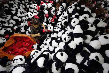 لیانیانگانگ، چین| کارمندی در حال درست کردن عروسک های پاندا جهت ارسال به جشنواره فصلی