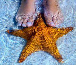 ستاره دریایی ماهی نیست، سر و مغز ندارد! بطور کلی از 1بخش مرکزی، 1دهان و 5 بازو یا بیشتر که دارای صدها مکنده قوی بنام پاهای لوله ایی میباشد تشکیل شده است. ستاره دریایی نسبت به تغییر روشنایی محیط وجهت مقابله با دشمن تغییر رنگ میدهد. برخی گونه هادرسال بیش از 1میلیون تخم میگذارند! درصورت ازدست دادن 1بازو، بازوی دیگری رشدوجایگزین خواهدشد.ستاره دریایی از صدف ومرجانها تغذیه میکند.