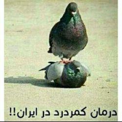 درمان کمر درد در ایران :)))