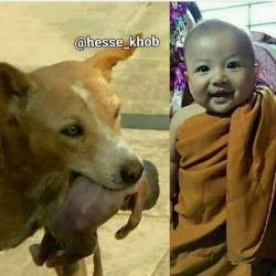 این همون بچه ای هست که این سگ مهربون نجاتش داد و اون و از آشغالا به بیمارستان برد.