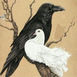 وقتی کبوتری شروع به معاشرت   با کلاغها می کند پرهایش سفید می ماند،   ولی قلبش سیاه میشود.   دوست داشتن کسی که لایق   دوست داشتن نیست اسراف محبت است .   #دکتر_علی_شریعتی