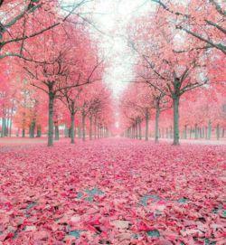 آرزو میکنم افتادن هر برگ آمینی باشد برای آرزوهای شما