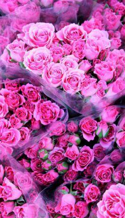 تقدیم به کسی که شکفتن هیچ گلی زیباتر از لبخند او نیست جشن میلادت بهترین بهانه برای فکر کردن به تو و به یاد آوردن خوبی هایت است سالروز تولدت مبارک عشقم❤❤خودت گلی این گلام تقدیمت@yeshil.papatya