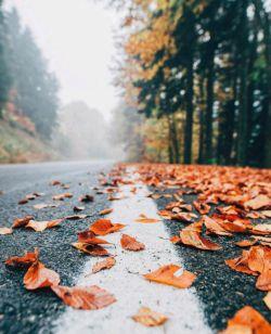 شاهکاری ست سمفونیِ پاییز شر شرِ باران، خش خشِ برگهاو صدای فریادِ سکوت اصلا آدم سرش درد می کند برای عاشق شدن..