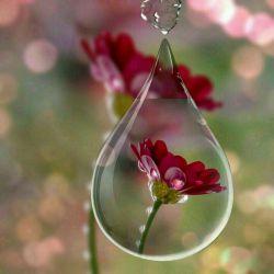 مهربان که باشی....صبحت هم زیباست-خورشیدهم زیباست.آسمان رنگ دیگری دارد.روزت رویایی ست.توبخواه برای مهربانی همیشه بهانه پیدا میشود.صبح زیباتون بخیردوستان...⚘⚘⚘⚘⚘