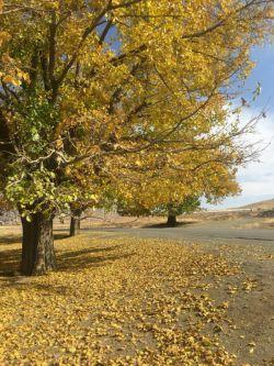 پاییز در تویسرکان//بختاج