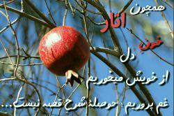 هم چون انار خون دل از خویش میخورم...  غم پرورم حوصله شرح قصه نیست... _______________________  عکس پاییز بوشهر