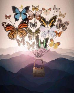 ➕این سختی هاست که انسان رو میسازه کسایی پروانه میشن که روزگار بیشتر بهشون پیله میکنه...!