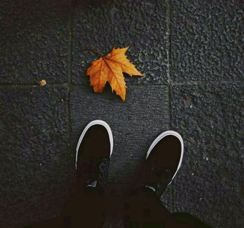 فصل عوض میشود جای آلو را خرمالو میگیرد جای دلتنگی را دلتنگی ...