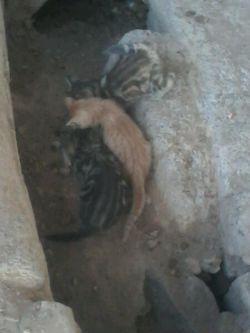 3 تا بچه گربه همین الان یهویی