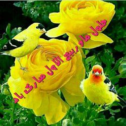 ربیع ماه ولادت خورشید بی غروب،  عشق بی پایان،  جلوه صفات حسنای الهی،  سرچشمه رحمت و عطوفت،  مظهر عشق و فداکاری مبارک باد.