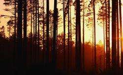 لای درختا که به اره میگفتند تقدیر  حرکت تو، پوزخند بی ریشگی شد