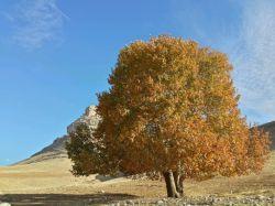 نمایی از کوه زرین _ درخت چنار _ پاییز