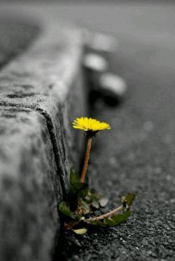 مهم نیست چه شکلی باشی مهربانی، تو را تبدیل به زیباترین فرد در تمام دنیا میکند...