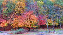 اینم یک عکس زیبا جنگل تنگه ی چهل چای شهرستان مینودشت