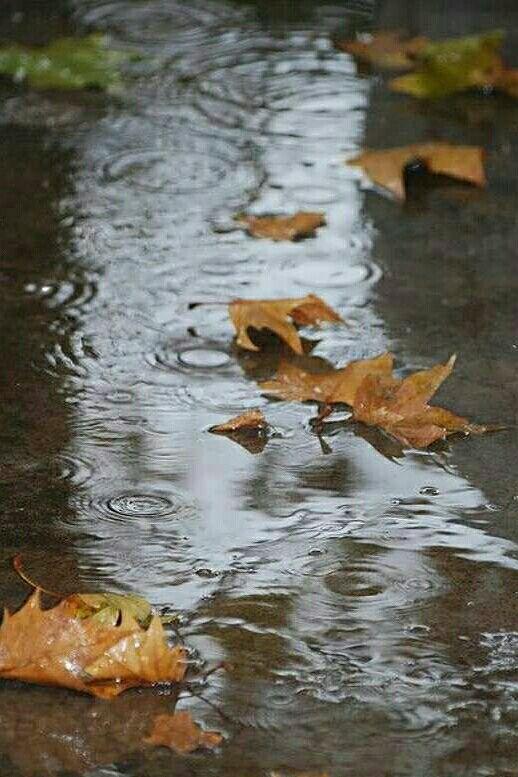 می توان در قاب خیس پنجره/ چك چك آواز باران را شنید/ می توان دلتنگی یك ابر را/ در بلور قطره ها بر شیشه دید/ می توان لبریز شد از قطره ها/ مهربان و بی ریا و ساده بود/ می توان با واژه های تازه تر/ مثل ابری شعر باران را سرود/ می توان در زیر باران گام زد/ لحظه های تازه ای آغاز كرد/ پاك شد در چشمه های آسمان/ زیر باران تا خدا پرواز كرد... ♥