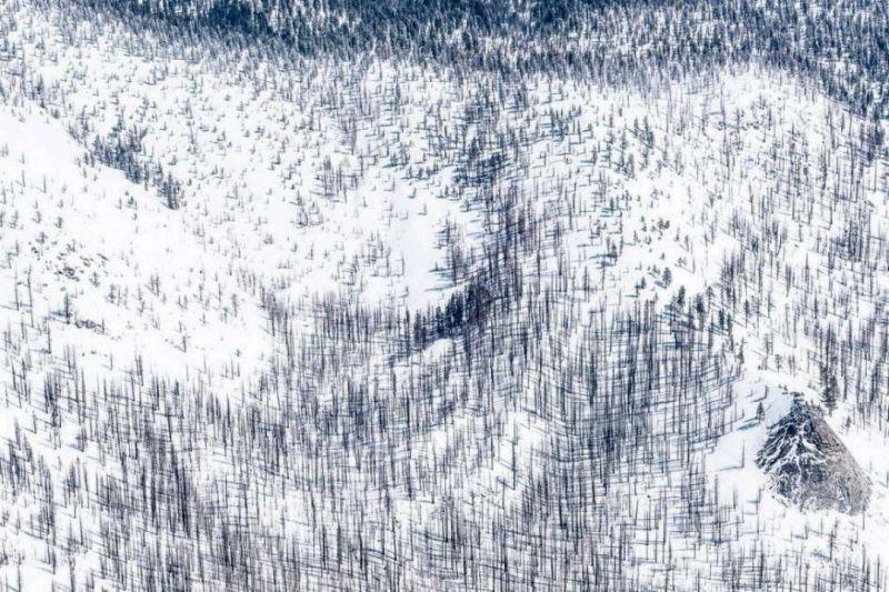 عکس روز #نشنال_جئوگرافی....  درخت های اسکلتی.... عکاس: الکس بی ... تپه ای در پارک ملی یوسیمیتی آمریکا که پوششی از برف به تن دارد. درختان نیمه سوخته به دلیل آتش سوزی جنگل به این حال و روز درآمده اند.