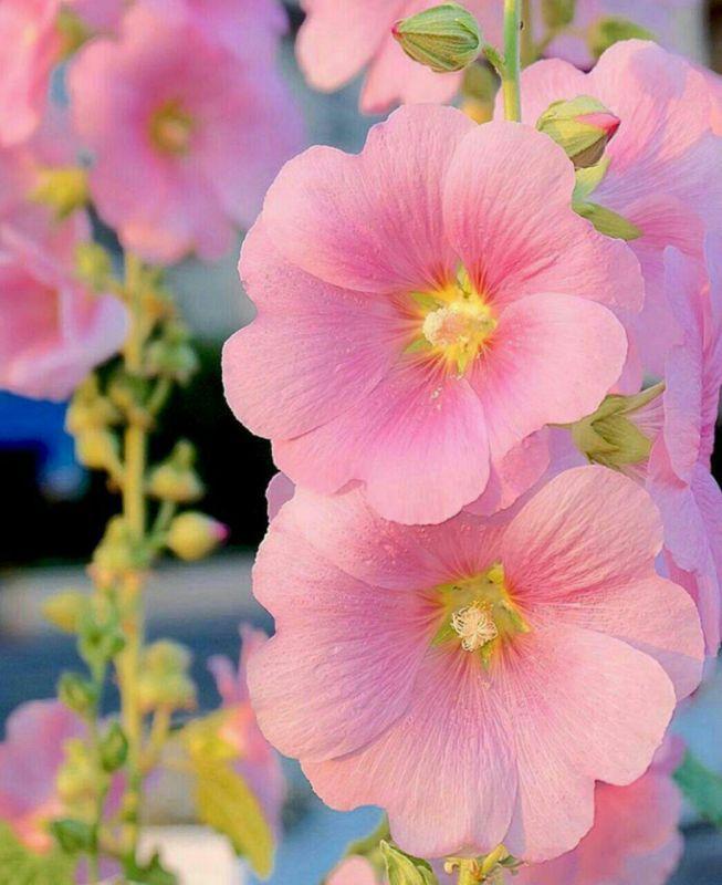 این گل های زیبا تقدیم دوستان زیباتر از گل ..