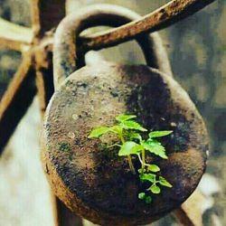 من درد تو را ز دست آسان ندهم دل برنکنم ز دوست تا جان ندهم  از  دوست  به یادگار  دردی دارم کآن درد به صد هزار درمان ندهم  #مولوی