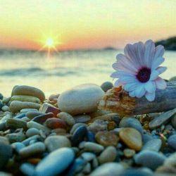 برخیز که روز دیگر آغاز کنیم، از نور دریچهای به دل باز کنیم،  وقت است که با دَمِ مناجات سحر، هنگام طلوع صبح، اعجاز کنیم.  #محسن_خانچی  سلام ، صبحتون بخیر هفته تون سرشار از موفقیت و شادکامی