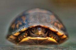 ♨️راز طول عمر لاکپشتها! لاک پشت ها به خاطر سبک زندگی خاصی که دارند نزدیک به ۱۵۰ سال عمر میکنند!  ✔️ سبک زندگیشونم اینه که سرشون تو لاک خودشونه، نه زندگی دیگران!☺️