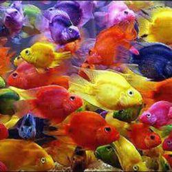 ماهیگیری پس از صید ماهی به خانه بازگشت تا آنرا بپزد اما دید نه روغن دارد نه آرد نه گاز  نه نمک…و نه ادویه برگشت ماهی را به آب انداخت ماهی سرش را از آب بیرون آورد و فریاد زد:  روحانی مچکریم...