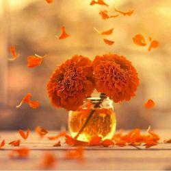 #ارزش قلب به عشق و ارزش سخن به صداقت ارزش چشم به پاکی و ارزش دست به یاری ارزش قدم به برداشتن و ارزش دوست به وفای اوست