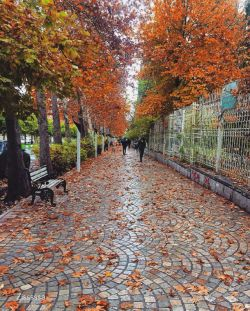 بلوار ارم شیرار یک روز پاییزی