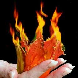 آه کز تاب دل سوخته جان میسوزد زآتش دل چه بگویم که زبان میسوزد  لذت عشق و وفا بین که سپند دل من بر سر آتش غم، رقص کنان می سوزد