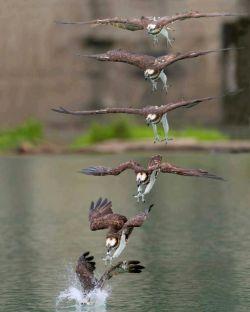 لحظه به لحظه از فرود برای شکار