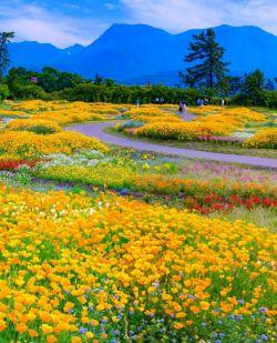 پارک زیبای گل در ژاپن