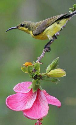 خدایا! ما بنده توئیم و بنده را جز اطاعت نشاید به ما الفبای بندگی بیاموز، خدایا! بی نگاه لطف تو هیچ کار به سامان نمی رسد نگاهت را از ما دریغ نکن، خدایا! عنانمان را از دست نفسمان بستان و یاد خودت را چنان در دلمان بنشان که تو از چشممان ببینی و از گوشمان بشنوی و از زبانمان بگویی، خدایا! نگاهمان را از غیر خودت بگردان..سلام روزتون عالی**