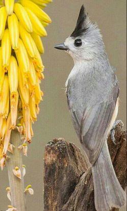 یادمون باشہ هیچ پرندہ اى با بارِ سنگین اوج نمیگیرد ڪینہ اگر بہ دل داشتہ باشیم سنگینیم! پس امروز ببخشیم دیگران را و خود را رها کنیم ..سلام صبحتون بخیرو پربرکت**