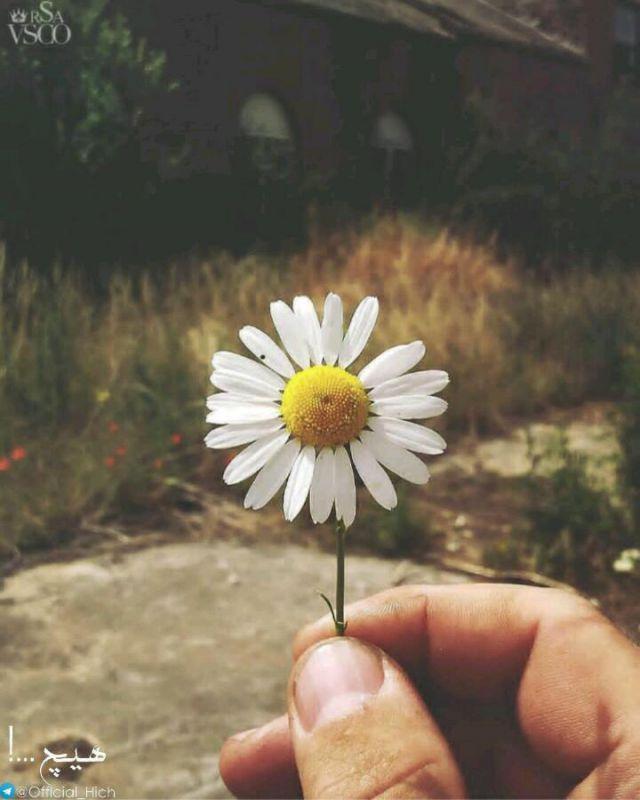 از دور تو را دوست دارم .....!بی هیچ عطری ...آغوشی ، لمسی ...یا حتی بوسه ای .....تنها دوستت دارم از دور ...!