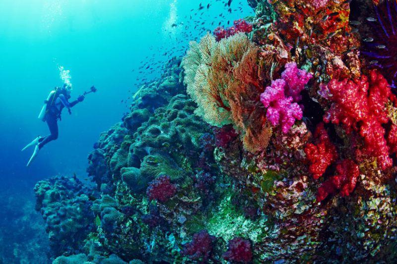 بر اساس پروژه «حفاظت از اقیانوس» تایلند، سازمان گردشگری تایلند (TAT) رسماً کمپین «حفاظت از اقیانوس و حفاظت برای غواصی بعدی» را راهاندازی کرده است و به غواصان به منظور کمک به حفاظت از اکوسیستم دریایی تایلند، تخفیف در سفرهای غواصی را پیشنهاد میدهد.