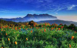 تور تایلند یعنی سفر به سرزمین شگفتی ها، حتما تا به حال چیزهای زیادی در مورد این کشور دیدنی شنیده اید و یا تصاویری از طبیعت بکر و خاص آن دیده اید و یا شاید هم به آن سفر کرده اید. طبیعت سرسبز و جنگل های بکر با کوه های بلند در کنار دریایی که با رنگ آبی خوشرنگش خودنمایی می کند، بخشی از جاذبه های گردشگری این کشور است. یکی از بهترین فعالیت هایی که در تایلند می توانید داشته باشید
