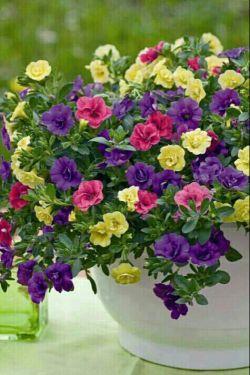 خوشبخت کسی است که شکوه رفتارش آفریننده لبخند زندگی بر لب های دیگری باشد،  لحظه لحظه ی زندگیتون                             شادی آفرین**