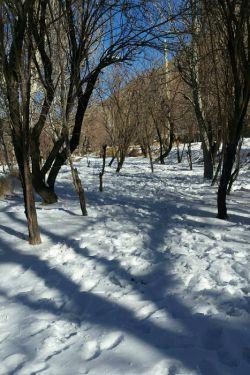 برف دیروز یزد (عکس از خودم )