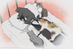 سباستین غرق در گربه ها