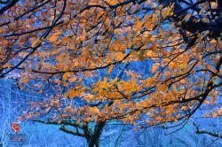 گیلان-شهرستان ماسال-تاسکوه ماسال-پاییز 96-عکس : بهرام حاجی زاده